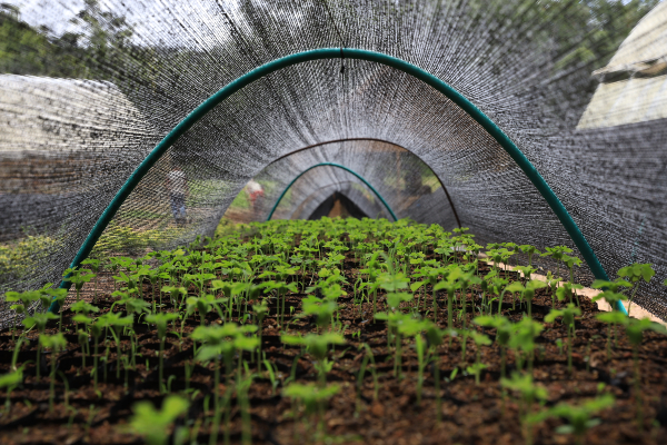 El Grupo EPM ha aportado 11,7 millones de árboles a la meta nacional de sembrar vida